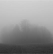 Von Nebel und Leben