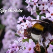 Happy Birthday, besonderer Freund